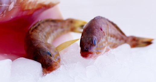 Sea Food at Kalliopi Kitchen, Rhodes